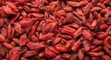 High Quality Goji berry/Dried Goji berry/Organic Goji berry for sale