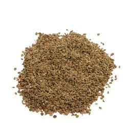 Celery Seed, Celery Powder, Celery Leaves/Dried Celery Seed | High Quality Celery Seed