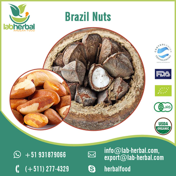 Rich in Minerals and Other Healthy Nutrients Brazil Nuts for Bulk Supply