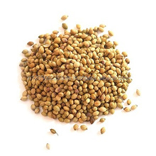 Indian pure natural superior quality whole spices Coriander Seed
