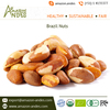 Organic Raw Brazil Nuts Price at Wholesale Price