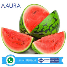 OBM Pure & Natural Watermelon Oil (Citrullus Vulgaris) with high quality