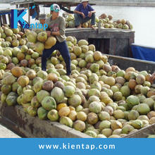 Best Quality Sweet water Fresh Tender Coconut - Kientap JSC