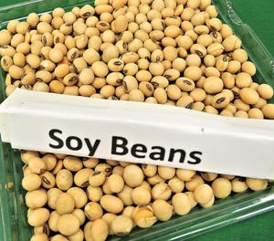 Soybeans ,Non gmo yellow soybean ,soya bean seed