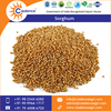 Fresh Quality Organic Bulk White Sorghum at Reliable Price