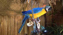 theme park high quality animatronic parrot for sale