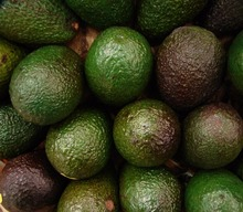 Fresh Hass and Fuerte Avocado