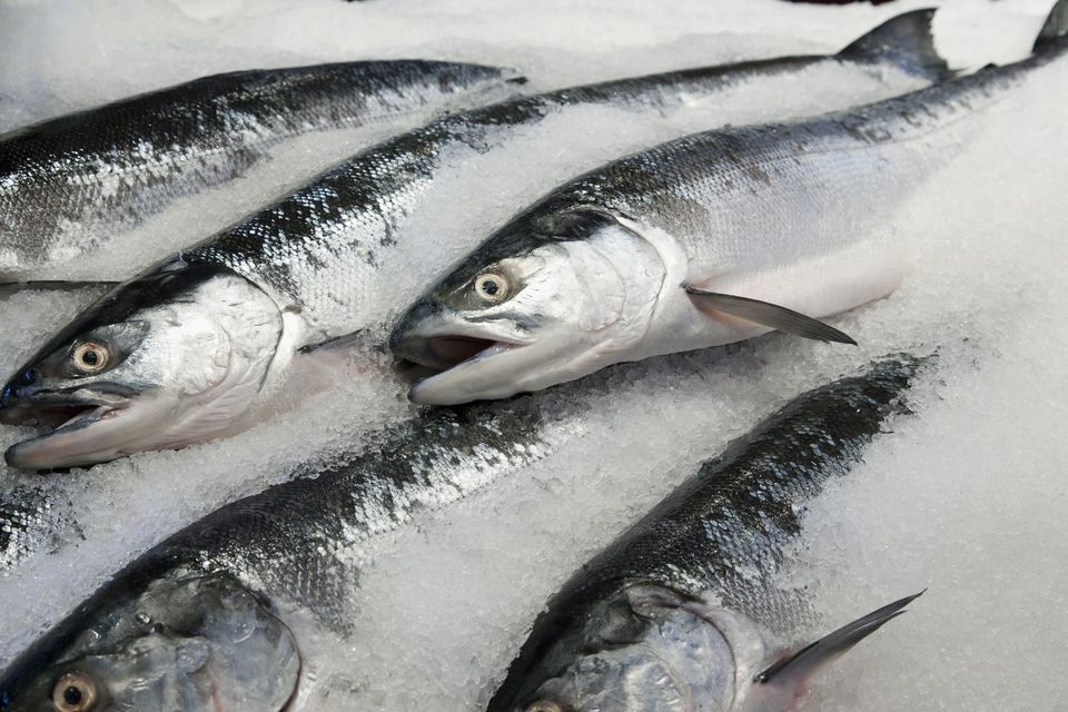 Frozen Tuna Fish, Frozen Atlantic Salmon Fish, Frozen Sardine Fish