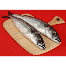 Thailand hot products high quality horse mackerel frozen whole round scad fish
