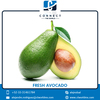 Widely Selling Fresh Avocado Fruit at Low Price