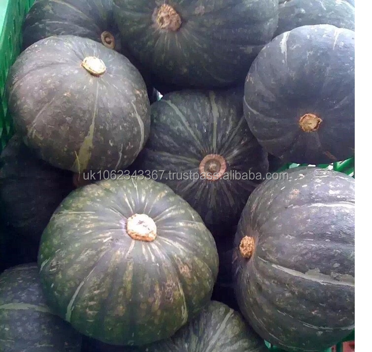 NEW CROP FRESH PUMPKIN /PUMPKIN SEEDS CERTIFIED QUALITY HACCP, GMP, ISO, BY SGS