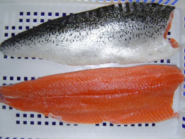 Premium Quality Atlantic Frozen Salmon from Chile HON; HG; Filet
