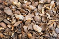 Palm Kernel Shell,Coconut Shell for Sale Now with Low Price