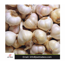 Wholesale Fresh Garlic Market Price garlic exporters