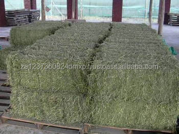 Alfalfa Hay Variety and Hay Type alfalfa