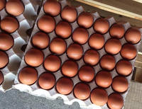 Poultry Farm Fresh Table Chicken White and Brown Eggs