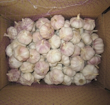 Quality Fresh Super White Garlic For Sale