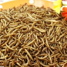Wholesale Organic Chicken Feed Dried Mealworms Wild Bird Food
