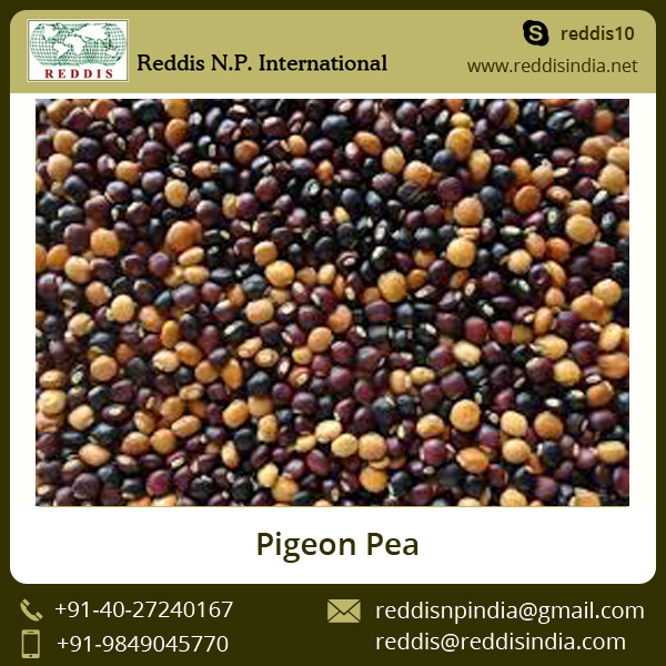 A Grade Top Quality Green Pigeon Peas at Low Market Price