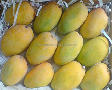 Fresh Sweet juicy Best quality Mango