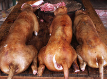 Frozen chicken meat for sale / Top quality Frozen Whole Chicken, Chicken Feet, Wings,