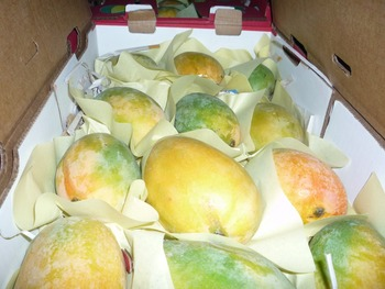 sweet mango for sale