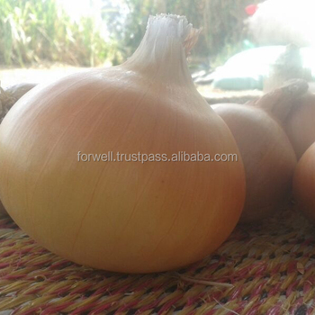 Good Quality New Crop All The Year Round Supply Wholesale Price Fresh