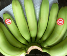 FRESH GREEN CAVENDISH BANANA