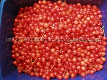 Price of IQF/Frozen cherry ,frozen sour cherry, fresh cherry