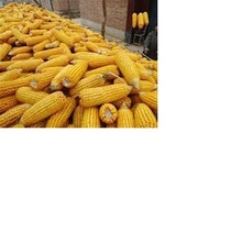 Yellow Corn/Maize for Animal Feed / Yellow Corn wholesale price