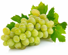 Turkish Fresh Grape