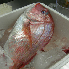 Frozen 150-350g size fresh high quality frozen red snapper sea bream fish whole round