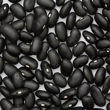 Wholesale Black Kidney Beans