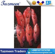 Best Quality for sale at low rate/Seafood Frozen Red Snapper Fish