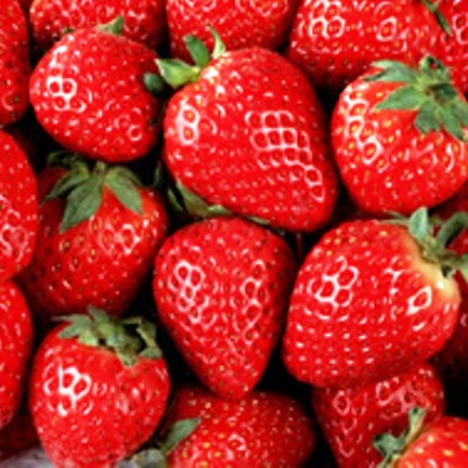 , Juicy Texture Strawberry with Great Sweetness Fresh Strawberry From South Africa