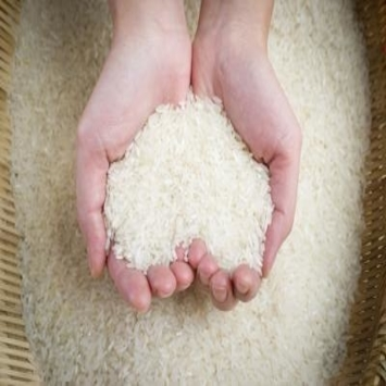 Best quality new crop Rice/ Basmati Rice/ Rice direct from miller