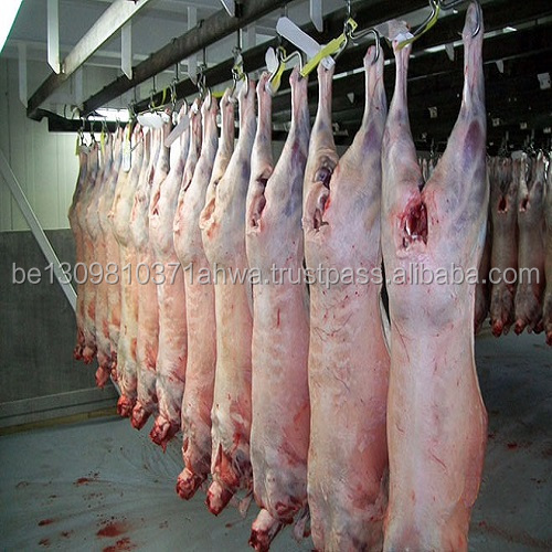 Whole Mutton, Whole Lamb Carcass For Sale