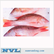HIGH QUALITY SEAFOOD FISH FROZEN RED SNAPPER/ FISH RED SNAPPER/ PRICE RED SNAPPER