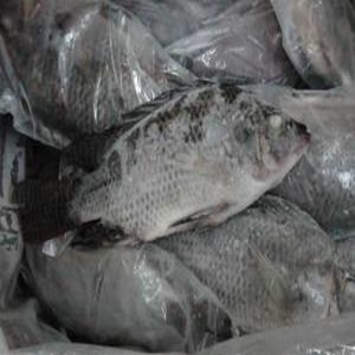 Export Hot Sell FROZEN WHOLE FISH BLACK TILAPIA