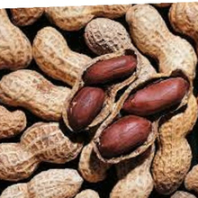 Exporters High Quality Indian Peanuts, Ground Nut