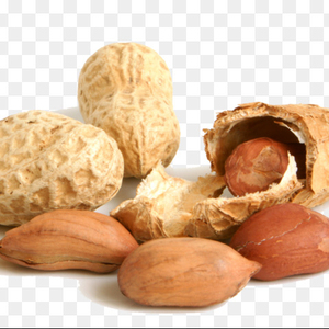 Peanut Seed Exporter From India