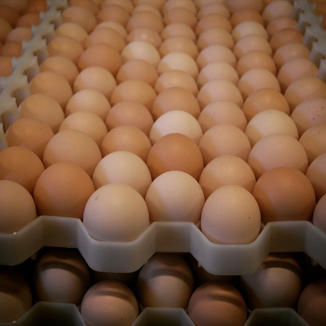 Fresh Chicken Table Eggs / White Chicken Eggs
