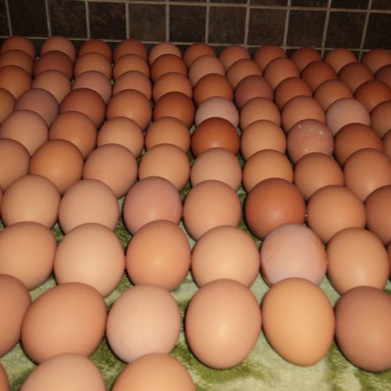 Farm Fresh Chicken Table Eggs Brown and White Shell Chicken Eggs...