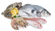 Frozen Fish and Seafood Wholesale