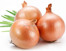 RED ONION HIGH QUALITY BEST PRICE