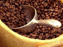 roasted coffee bean robusta