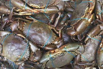 Seafood/Live Crab/Live Mud Crab! / live blue crab buyer and farm