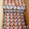 FRESH FARM CHICKEN EGGS