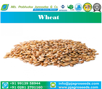 Pure Durum Wheat
