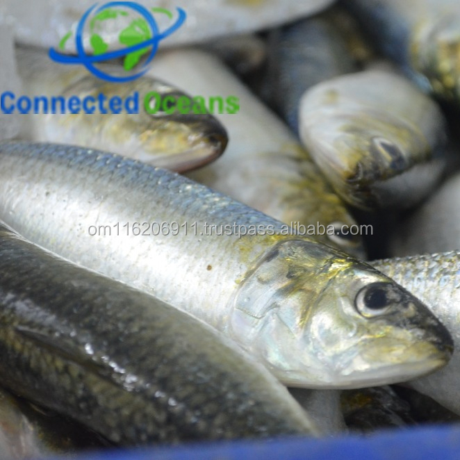 Frozen Sardine seafood for good price